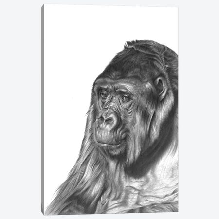 Gorilla Canvas Print #RMC19} by Richard Macwee Canvas Art