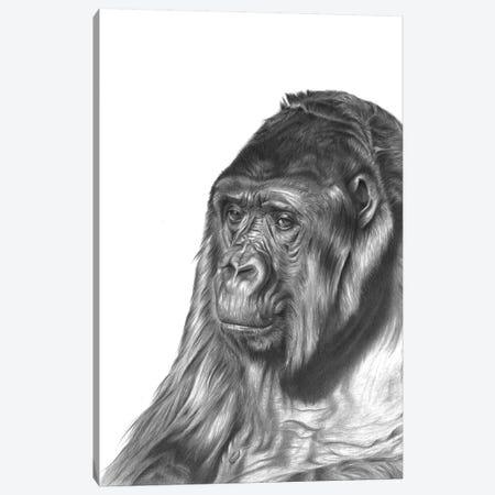 Gorilla Canvas Print #RMC19} by Richard Macwee Canvas Art