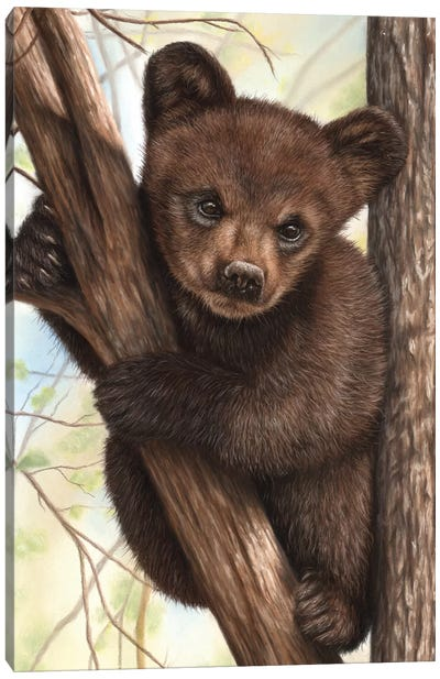 Bear Cub Canvas Art Print
