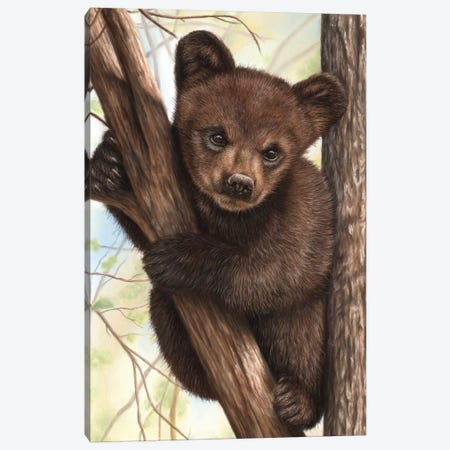 Bear Cub Canvas Print #RMC1} by Richard Macwee Art Print