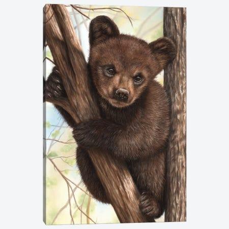 Bear Cub Canvas Print #RMC1} by Richard Macwee Art Print