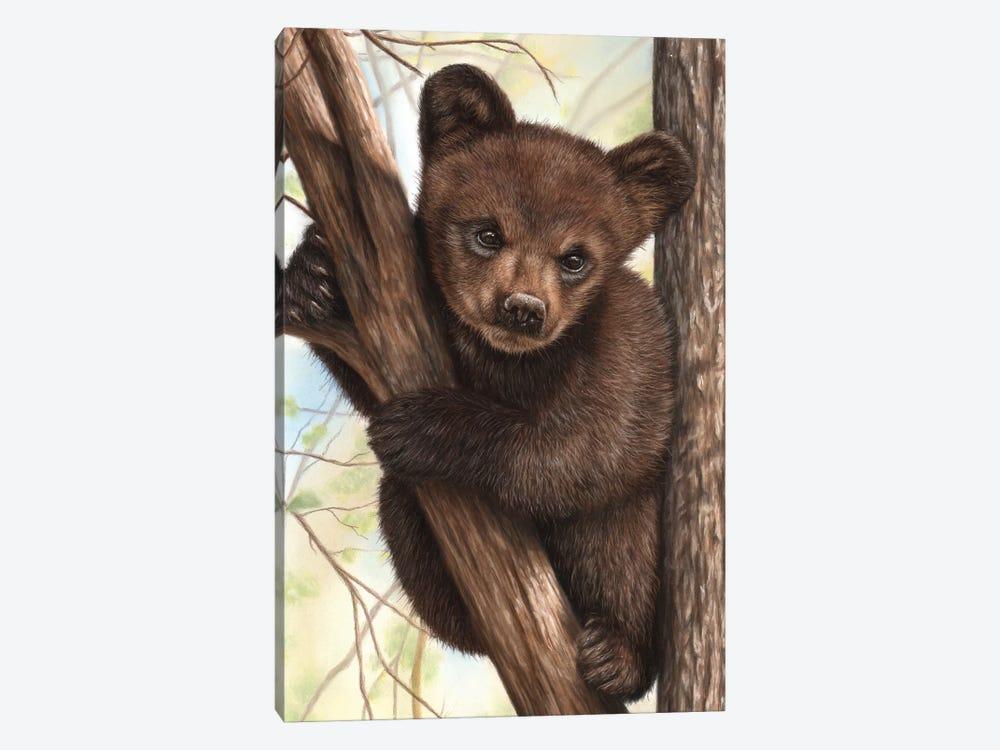 Bear Cub by Richard Macwee 1-piece Canvas Wall Art