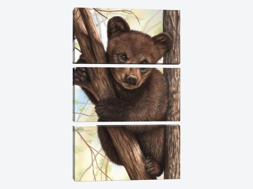 Bear Cub by Richard Macwee 3-piece Canvas Art