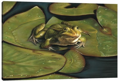 Green Frog Canvas Art Print