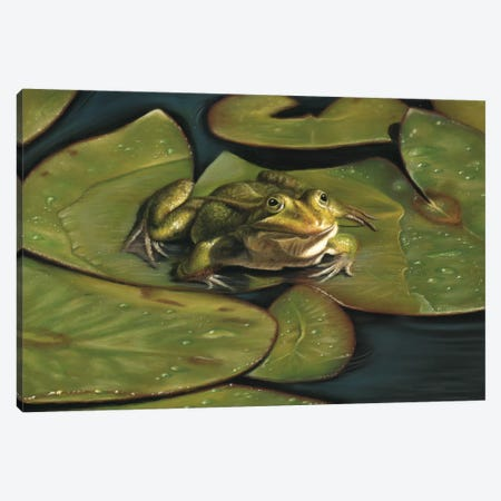 Green Frog Canvas Print #RMC20} by Richard Macwee Canvas Print