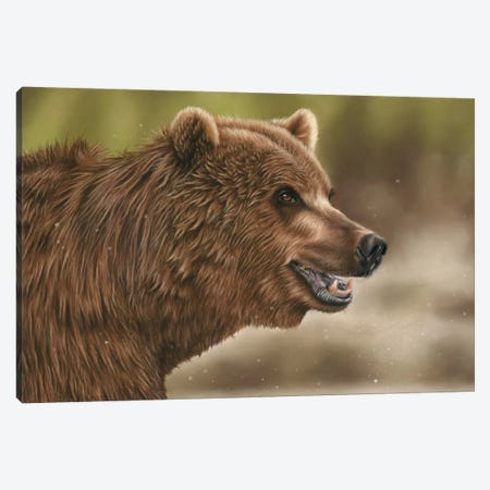 Grizzly Bear Canvas Print #RMC21} by Richard Macwee Canvas Art Print