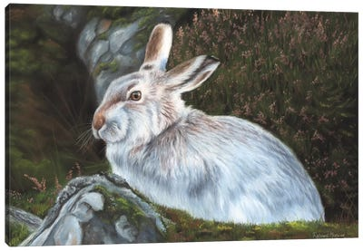 Hare Canvas Art Print