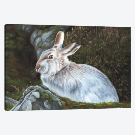 Hare Canvas Print #RMC22} by Richard Macwee Canvas Art Print