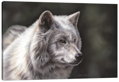 Hudson Bay Wolf Canvas Art Print