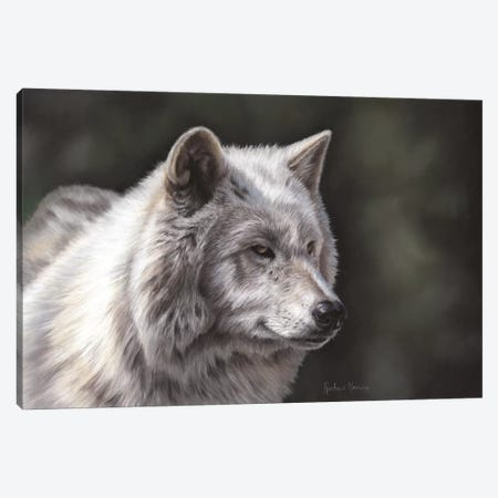 Hudson Bay Wolf Canvas Print #RMC24} by Richard Macwee Canvas Art