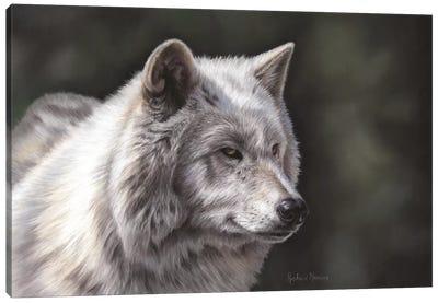Hudson Bay Wolf Canvas Art Print