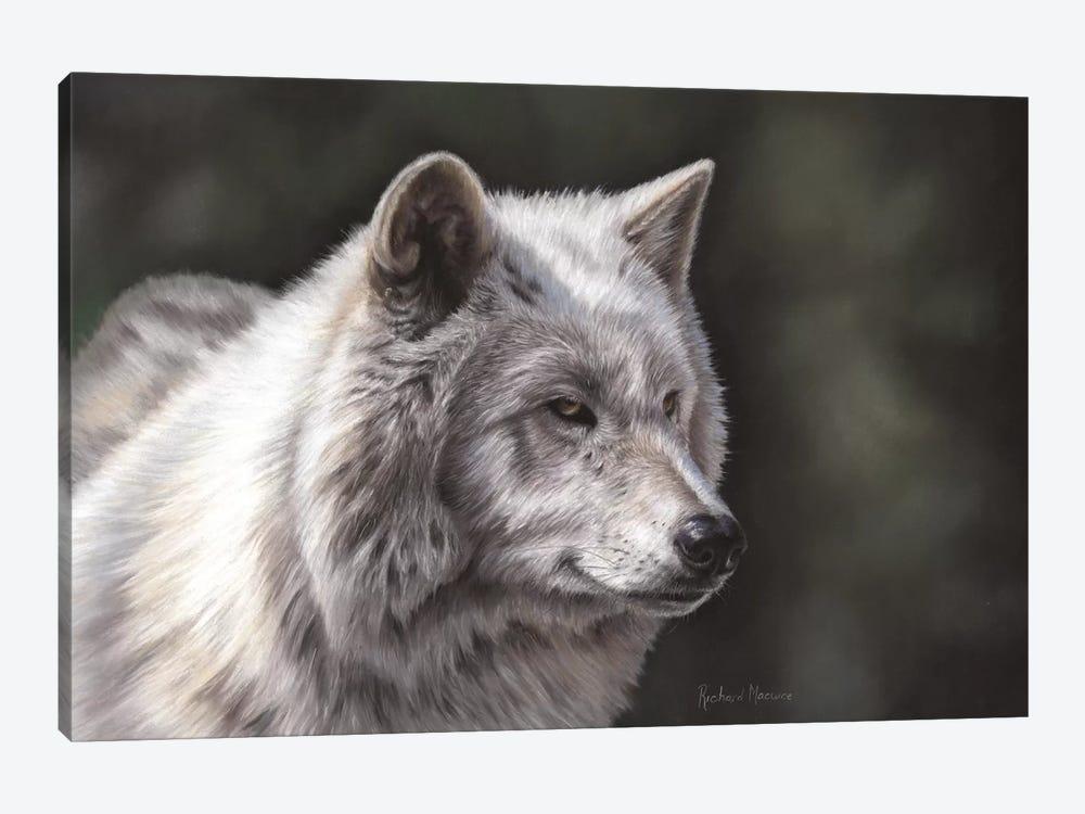 Hudson Bay Wolf by Richard Macwee 1-piece Canvas Wall Art