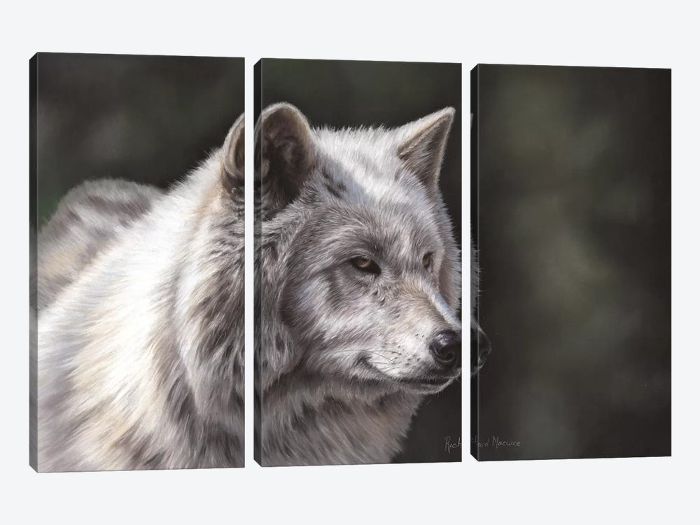 Hudson Bay Wolf by Richard Macwee 3-piece Canvas Art