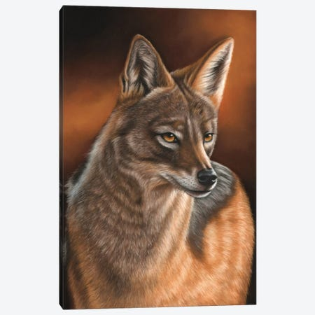 Jackal Canvas Print #RMC25} by Richard Macwee Canvas Artwork