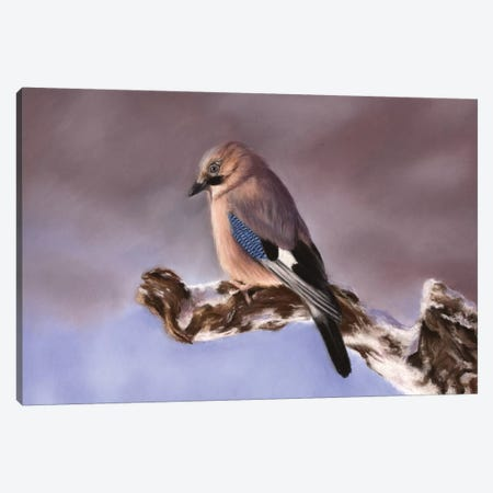 Jay Canvas Print #RMC27} by Richard Macwee Canvas Art