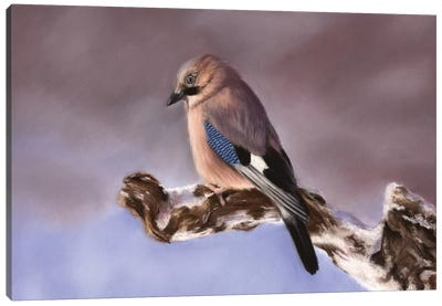 Jay Canvas Art Print