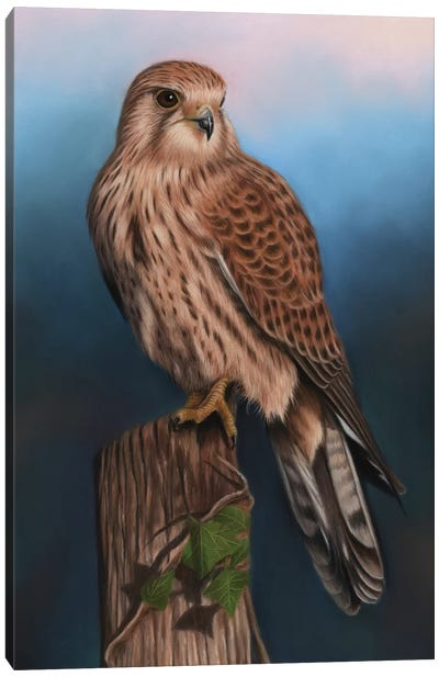 Kestrel Canvas Art Print