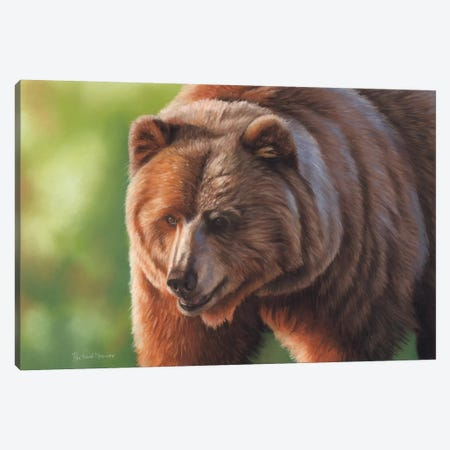 Kodiak Bear Canvas Print #RMC29} by Richard Macwee Canvas Art Print