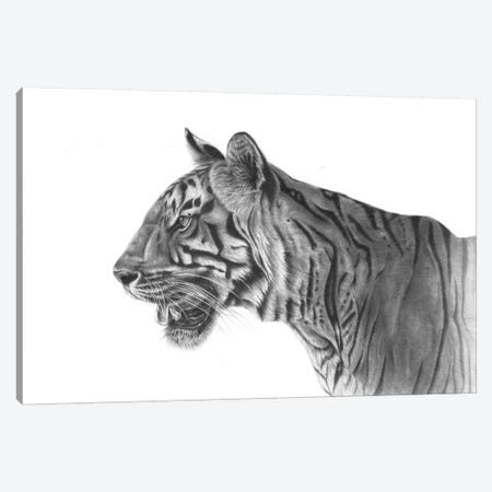 Bengal Tiger 3-Piece Canvas #RMC2} by Richard Macwee Canvas Print
