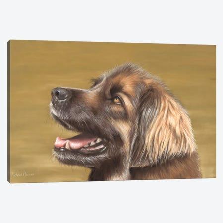 Leonberger Canvas Print #RMC30} by Richard Macwee Canvas Artwork