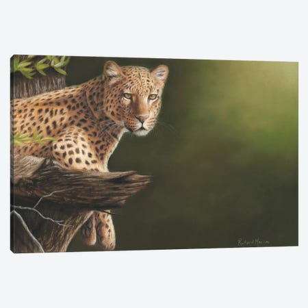Leopard Canvas Print #RMC31} by Richard Macwee Canvas Art