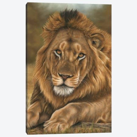 Lion Canvas Print #RMC32} by Richard Macwee Canvas Wall Art
