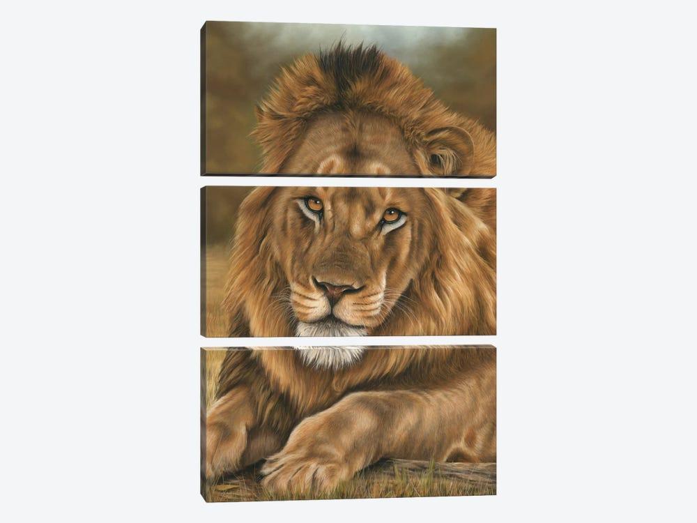 Lion by Richard Macwee 3-piece Art Print