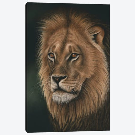 Lion Portrait Canvas Print #RMC33} by Richard Macwee Canvas Wall Art