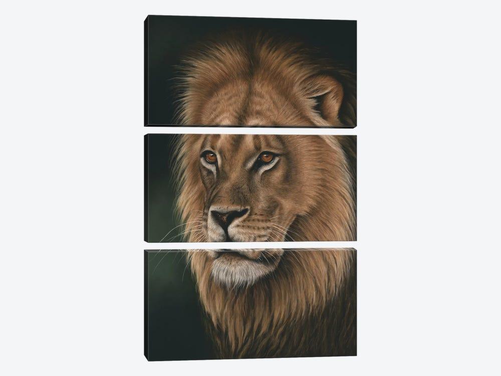 Lion Portrait by Richard Macwee 3-piece Canvas Wall Art