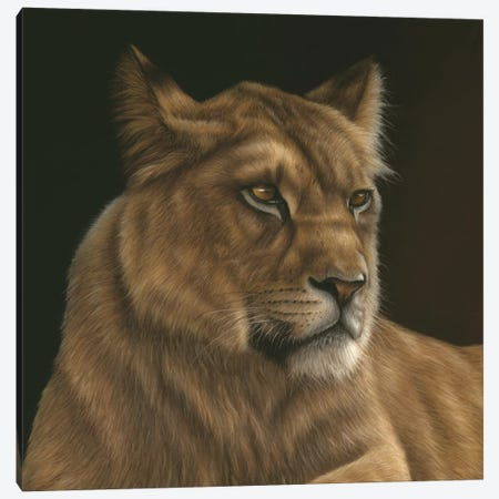 Lioness 3-Piece Canvas #RMC34} by Richard Macwee Art Print