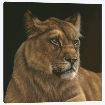 Lioness Canvas Print #RMC34} by Richard Macwee Art Print