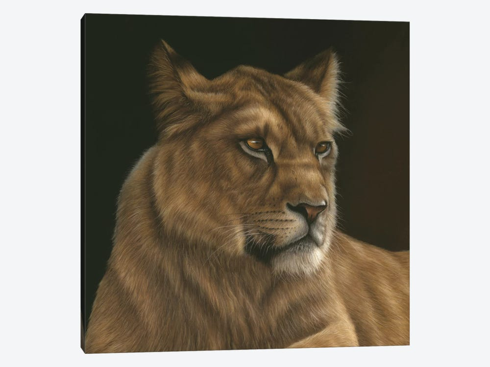 Lioness by Richard Macwee 1-piece Canvas Print