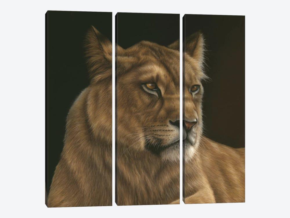 Lioness by Richard Macwee 3-piece Art Print