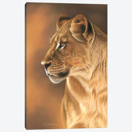 Lioness Portrait Canvas Print #RMC35} by Richard Macwee Art Print