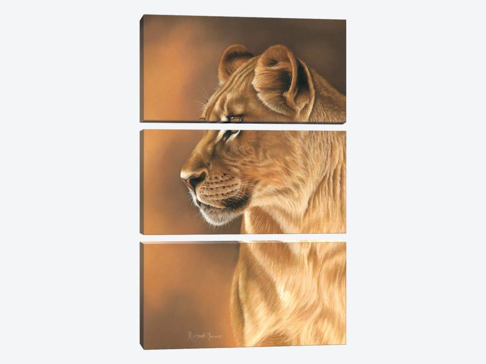 Lioness Portrait by Richard Macwee 3-piece Canvas Art