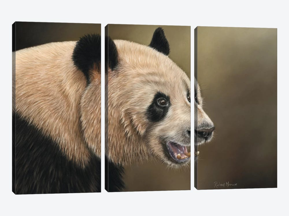 Panda by Richard Macwee 3-piece Canvas Wall Art
