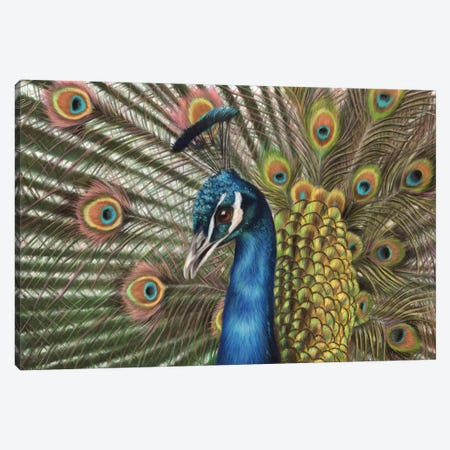 Peacock Canvas Print #RMC38} by Richard Macwee Canvas Art