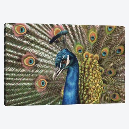 Peacock Canvas Print #RMC38} by Richard Macwee Canvas Art