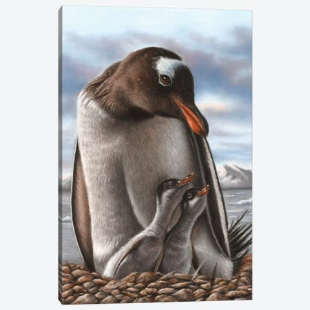 Penguin Canvas Print #RMC39} by Richard Macwee Canvas Art