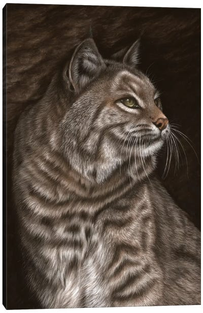 Bobcat Canvas Art Print