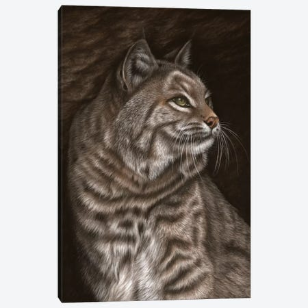 Bobcat Canvas Print #RMC3} by Richard Macwee Canvas Art Print