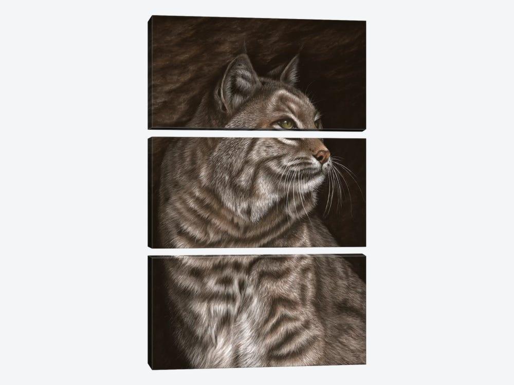 Bobcat by Richard Macwee 3-piece Canvas Wall Art