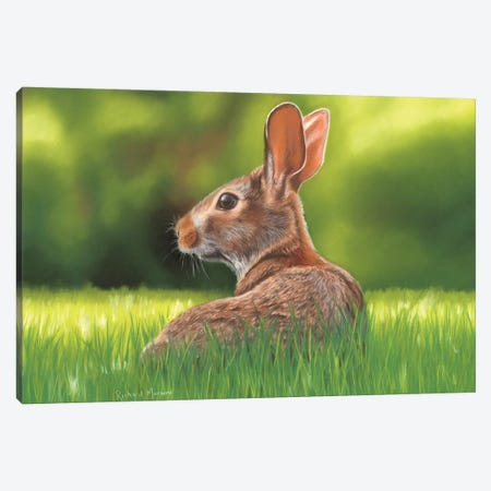 Rabbit Canvas Print #RMC42} by Richard Macwee Canvas Art Print