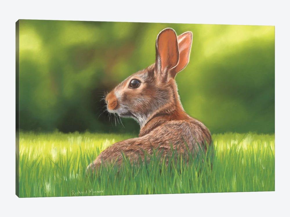 Rabbit by Richard Macwee 1-piece Canvas Artwork