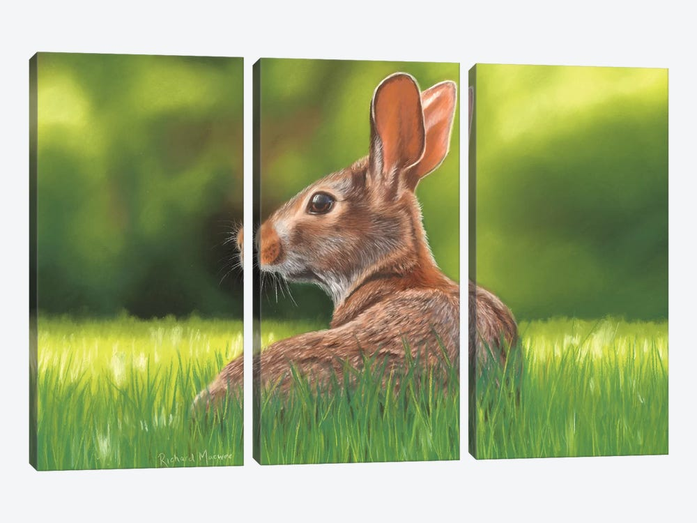 Rabbit by Richard Macwee 3-piece Canvas Art