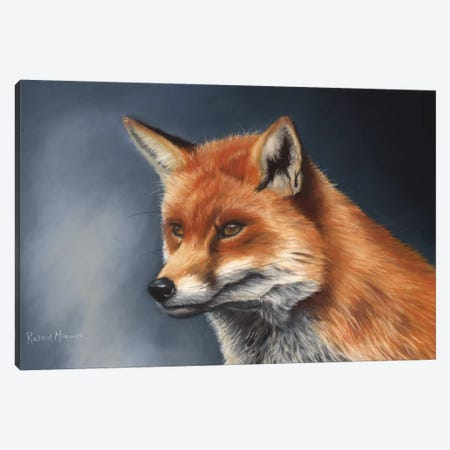 Red Fox Canvas Print #RMC43} by Richard Macwee Canvas Print
