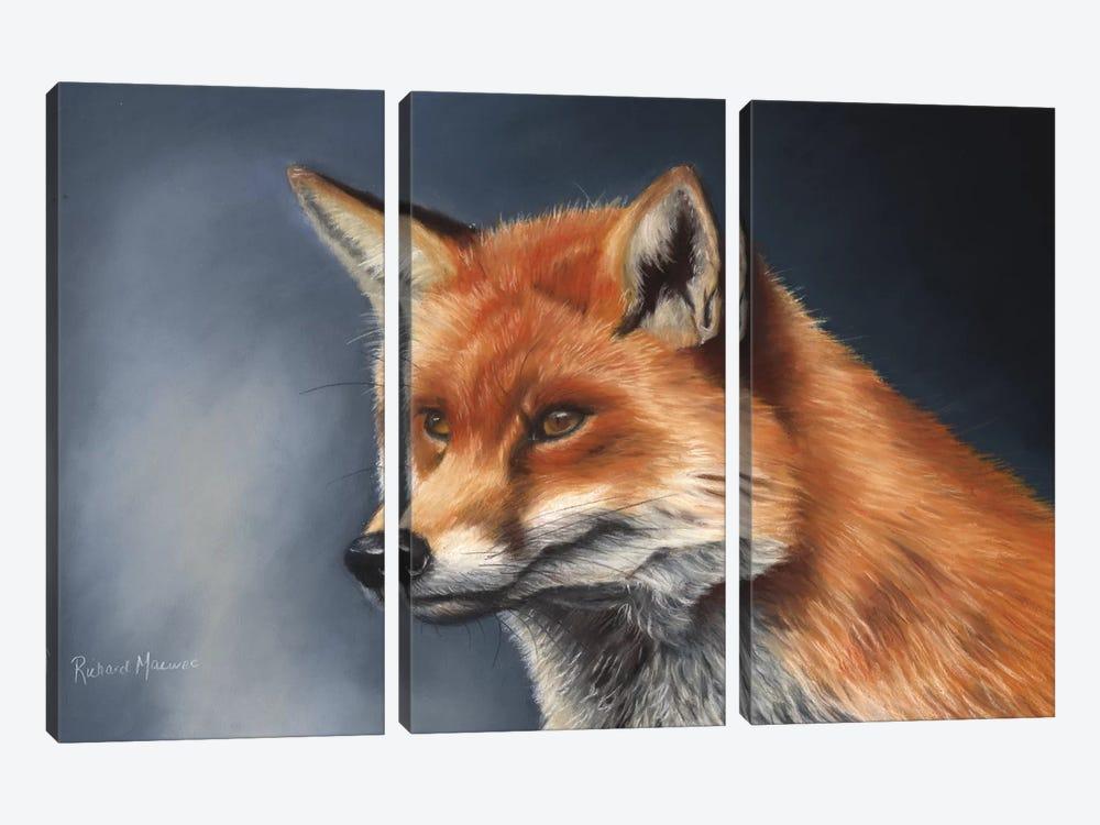 Red Fox by Richard Macwee 3-piece Canvas Print