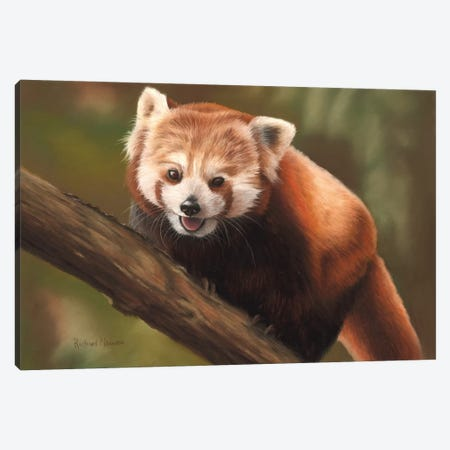 Red Panda Canvas Print #RMC44} by Richard Macwee Canvas Artwork