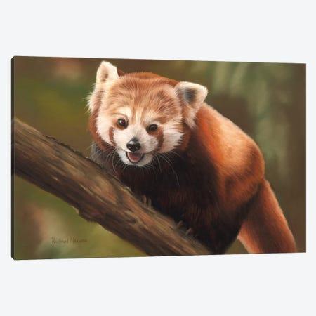 Red Panda Canvas Print #RMC44} by Richard Macwee Canvas Artwork
