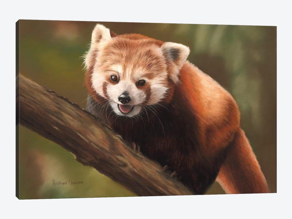 Red Panda by Richard Macwee 1-piece Canvas Wall Art